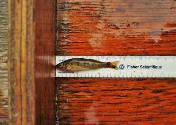 ela-fish-measure