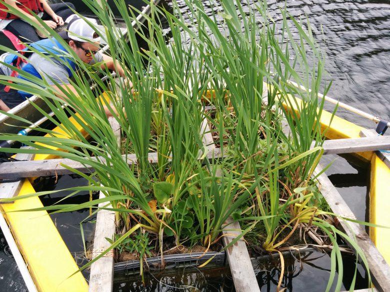 Floating bioplatforms on a lake