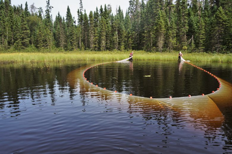 Trap nets being set in circular formation in a lake in Canada.