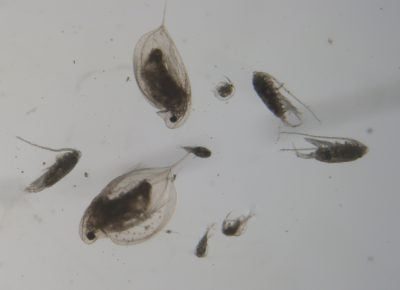 Zooplankton and Fresh Water