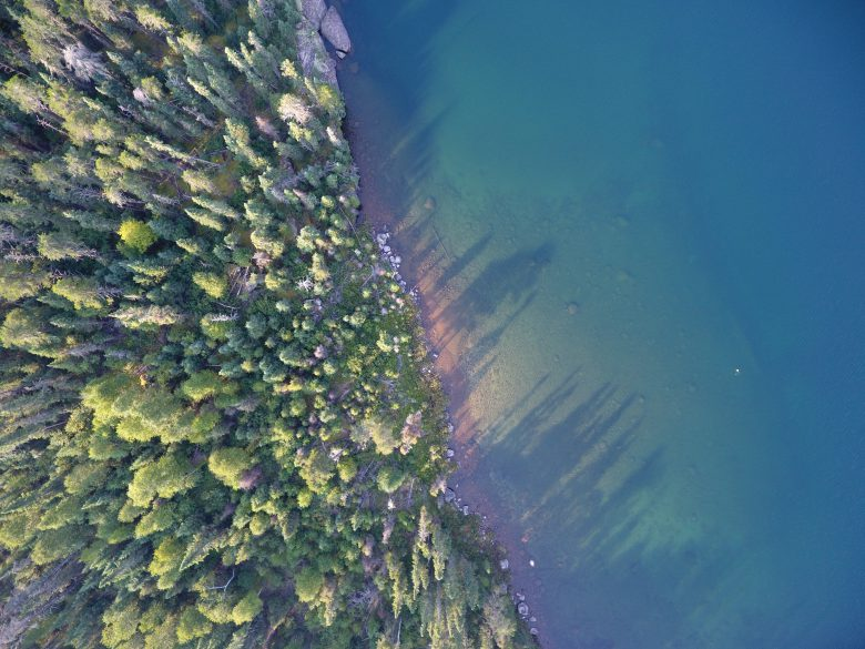 Aerial shot of the shoreline of a lake with blue and purple tinges, and green trees.
