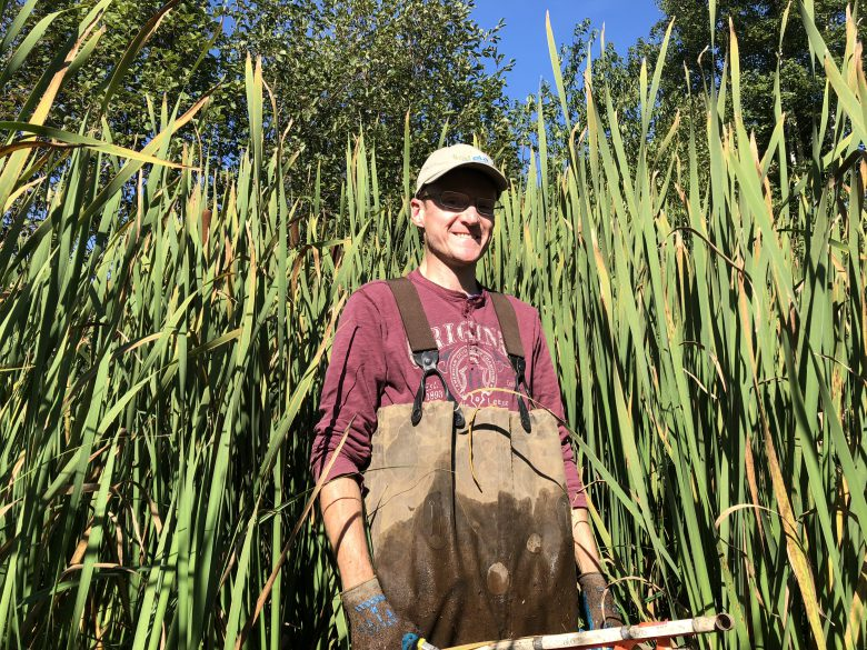Man with wet pants stands facing camera in front of cattail plants in wetlands