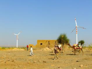 Camels walking in a rural area of the desert, with a windmill in the distance.