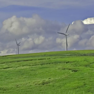 Outdoor modern energy windmills with bright green grass.