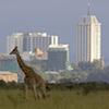 Lone giraffe against backdrop of the Nairobi city skyline – Nairobi national park, Kenya