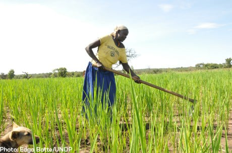 Grace Lawilu, a rice farmer in Northern Uganda. Photo: Edga Batte/UNDP