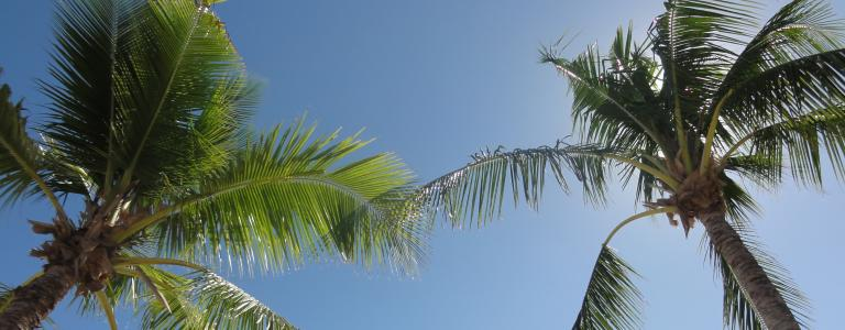 Palm trees in Fiji against a blue sky