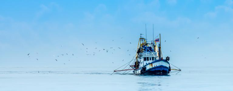 Fishing boat on open ocean surrounded by seagulls.