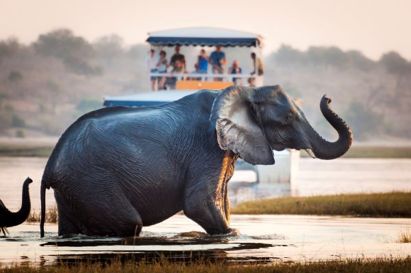 An elephant crosses a river at sunrise in a national park in Botswana with tourists looking on in distance