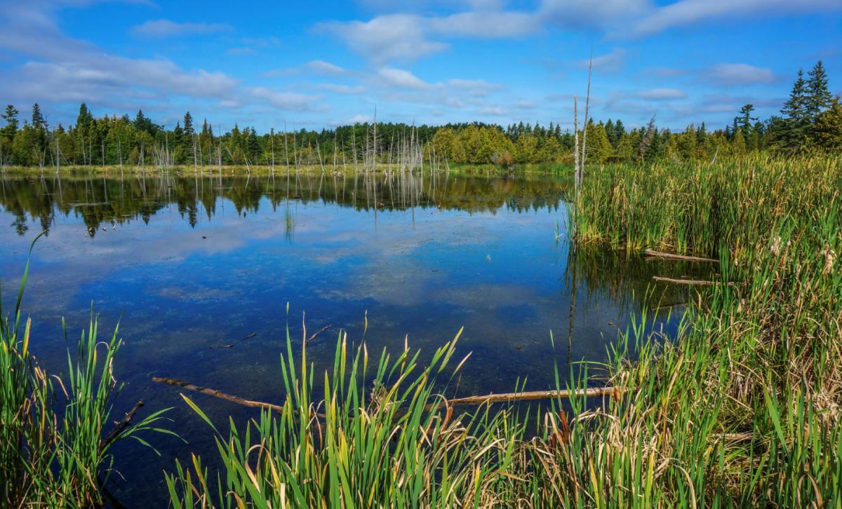 Wetlands in Manitoba, Canada