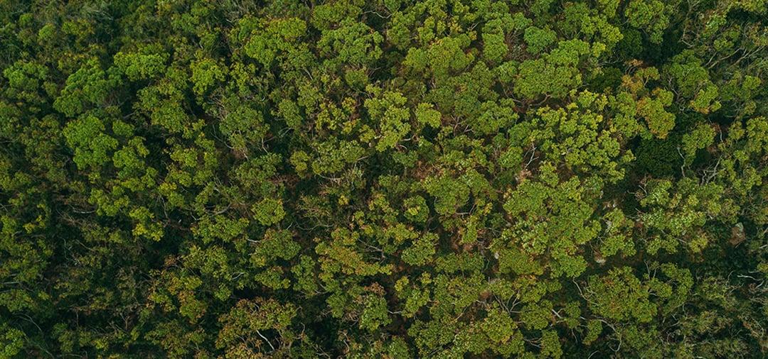 Usmca Versus Nafta On The Environment