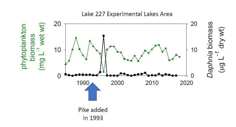 ELA graph adding pike