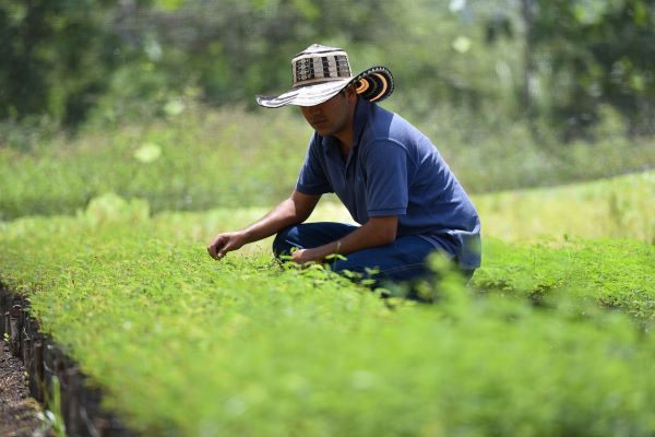 A farmer wearing a sunhat crouches down to inspect a bed of seedlings in Colombia